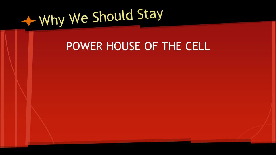Why We Should Stay POWER HOUSE OF THE CELL