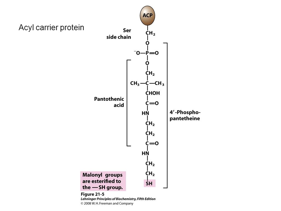 Acyl carrier protein