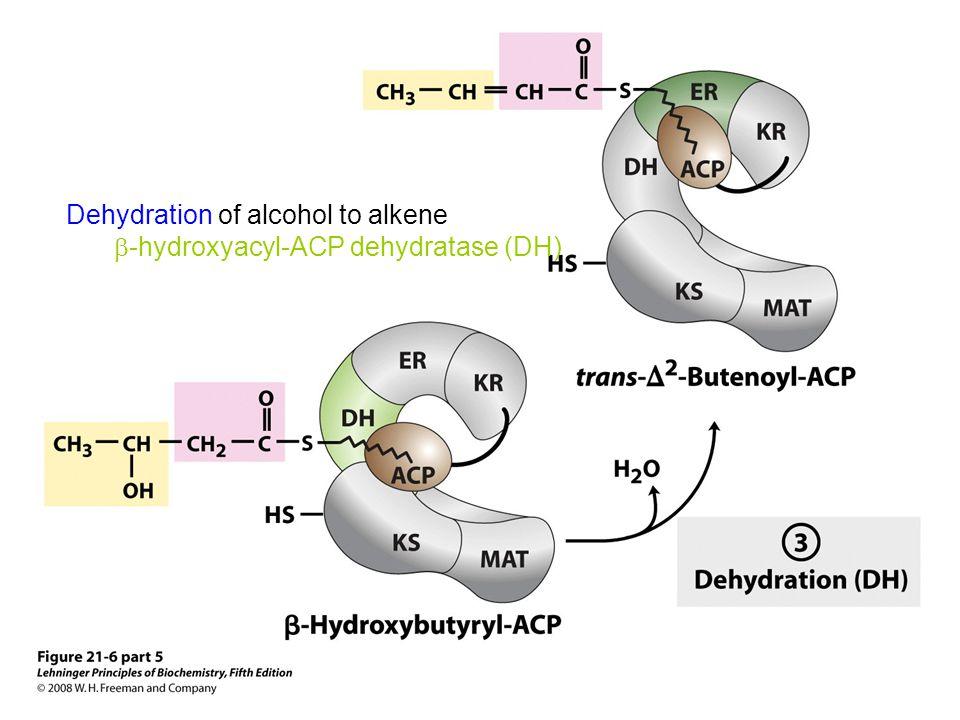 Dehydration of alcohol to alkene  -hydroxyacyl-ACP dehydratase (DH)
