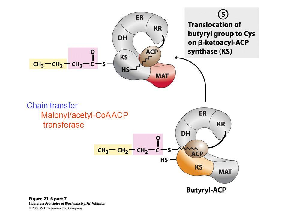 Chain transfer Malonyl/acetyl-CoA ACP transferase