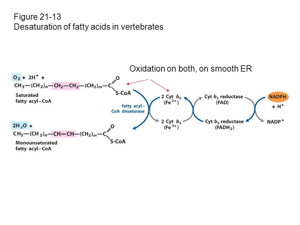 Figure 21-13 Desaturation of fatty acids in vertebrates Oxidation on both, on smooth ER