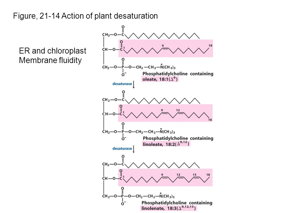 Figure, 21-14 Action of plant desaturation ER and chloroplast Membrane fluidity