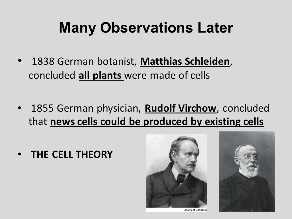 Many Observations Later 1838 German botanist, Matthias Schleiden, concluded all plants were made of cells 1855 German physician, Rudolf Virchow, concl