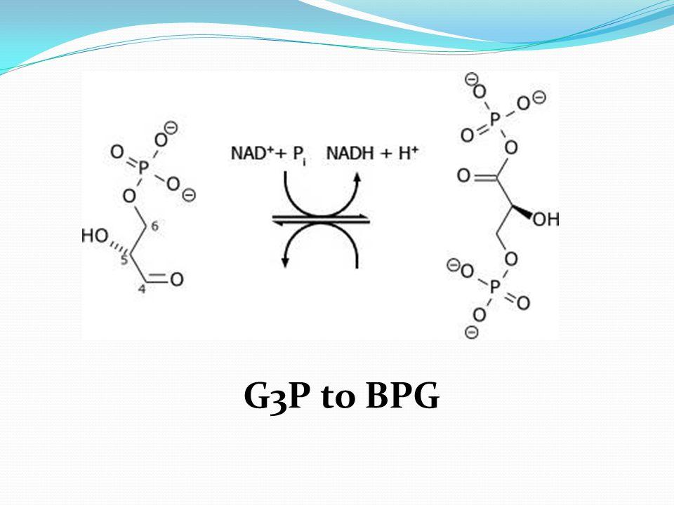G3P to BPG