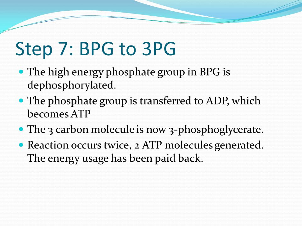 Step 7: BPG to 3PG The high energy phosphate group in BPG is dephosphorylated.
