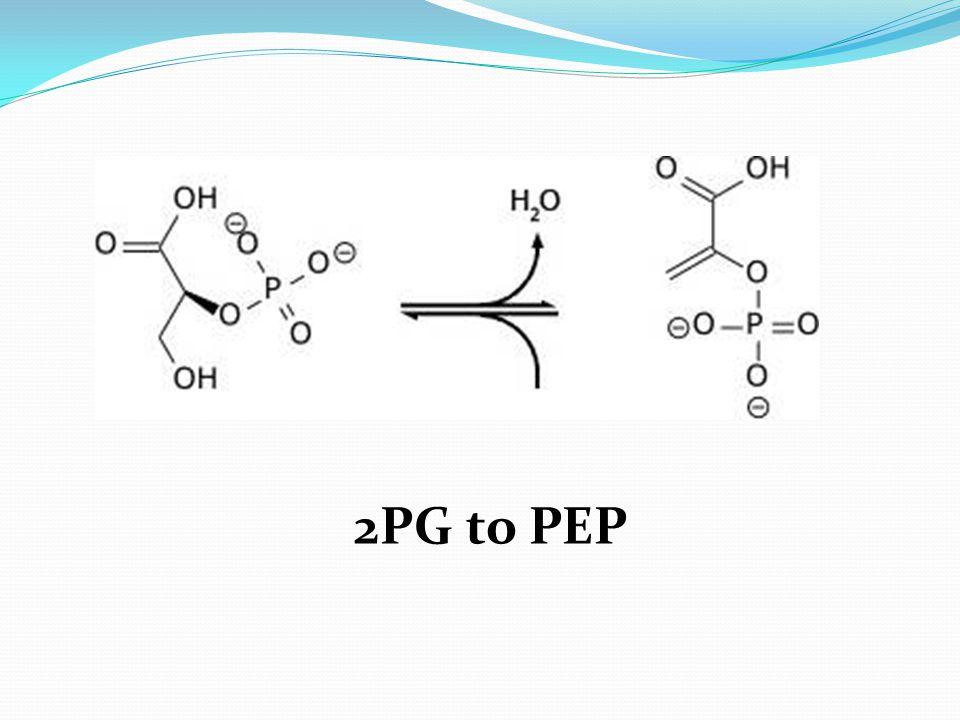 2PG to PEP