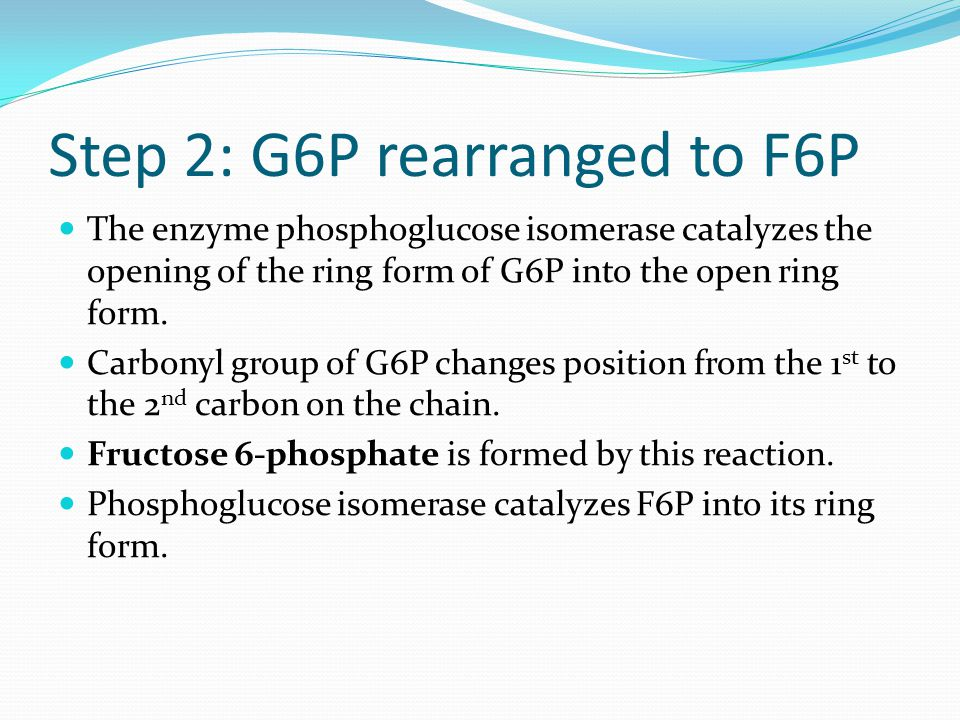 Step 2: G6P rearranged to F6P The enzyme phosphoglucose isomerase catalyzes the opening of the ring form of G6P into the open ring form.
