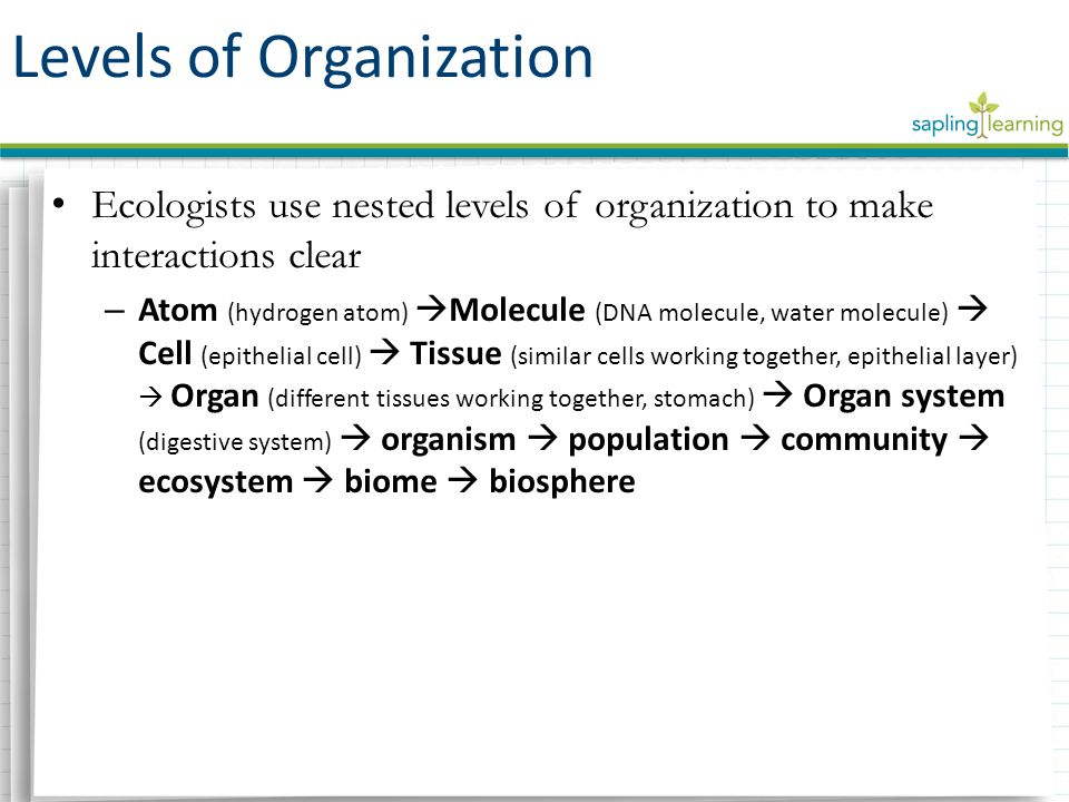 Ecologists use nested levels of organization to make interactions clear – Atom (hydrogen atom)  Molecule (DNA molecule, water molecule)  Cell (epithelial cell)  Tissue (similar cells working together, epithelial layer)  Organ (different tissues working together, stomach)  Organ system (digestive system)  organism  population  community  ecosystem  biome  biosphere Levels of Organization