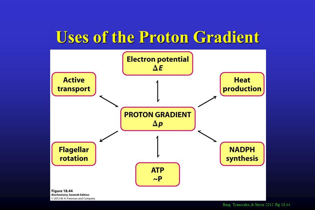 Uses of the Proton Gradient Berg, Tymoczko, & Stryer 2012 Fig 18.44