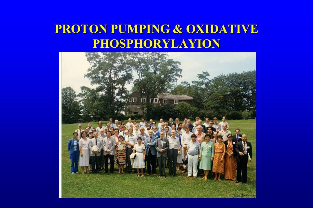 PROTON PUMPING & OXIDATIVE PHOSPHORYLAYION