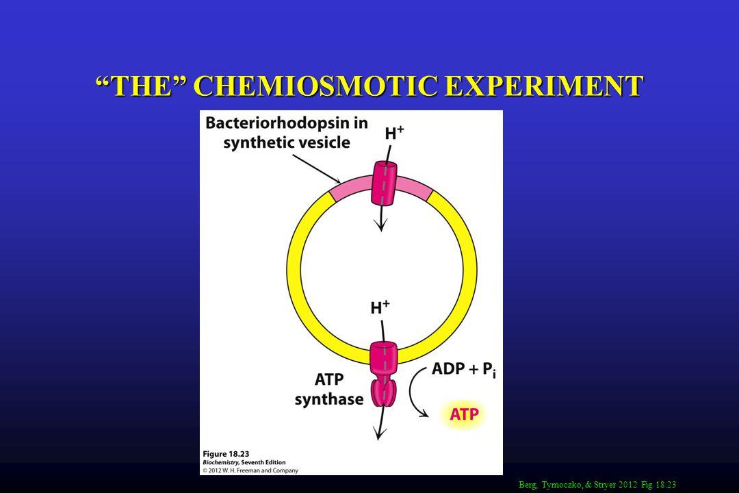 THE CHEMIOSMOTIC EXPERIMENT Berg, Tymoczko, & Stryer 2012 Fig 18.23