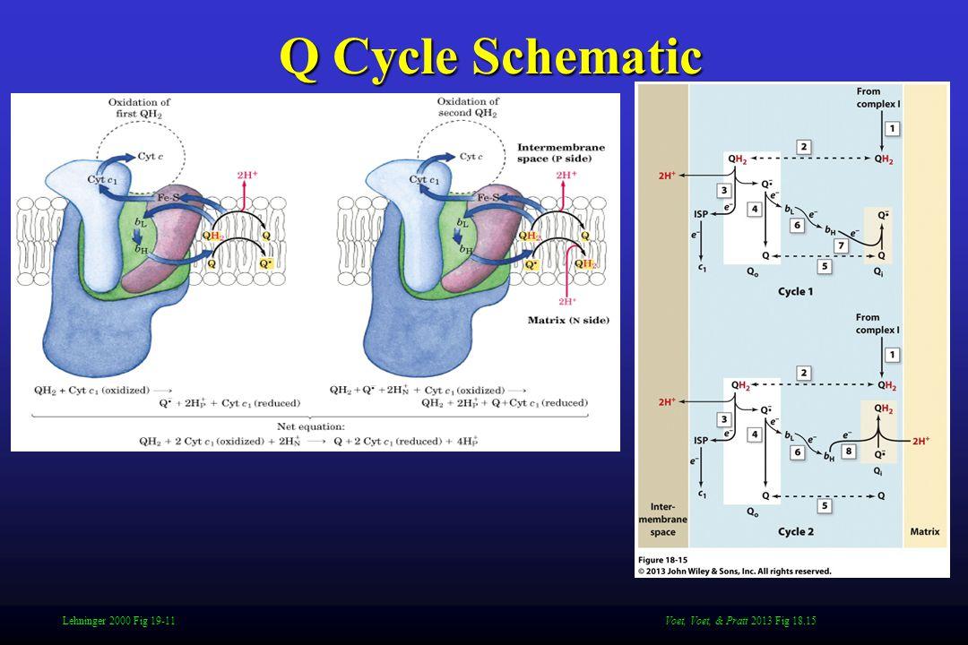 Lehninger 2000 Fig 19-11 Q Cycle Schematic Voet, Voet, & Pratt 2013 Fig 18.15