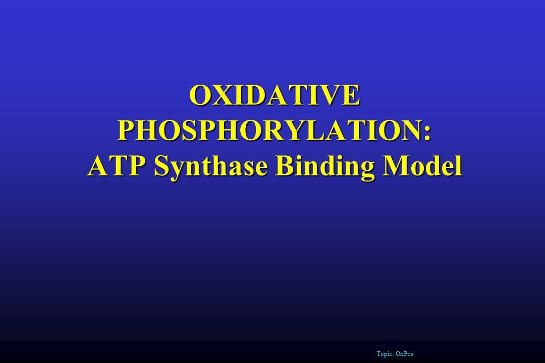 OXIDATIVE PHOSPHORYLATION: ATP Synthase Binding Model Topic: OxPos