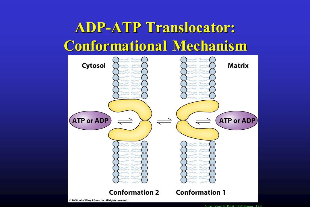 ADP-ATP Translocator: Conformational Mechanism Voet, Voet & Pratt 2008 Figure 18.6