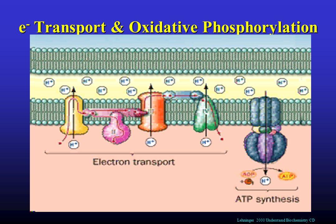 e - Transport & Oxidative Phosphorylation Lehninger 2000 Understand Biochemistry CD