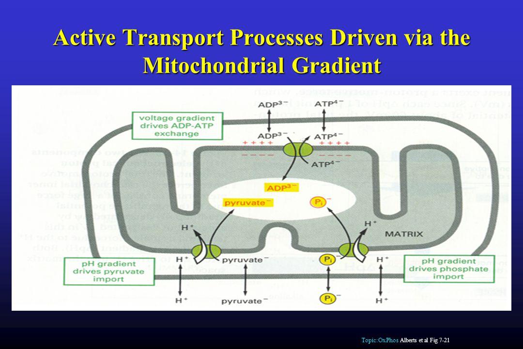 Active Transport Processes Driven via the Mitochondrial Gradient Topic:OxPhos Alberts et al Fig 7-21