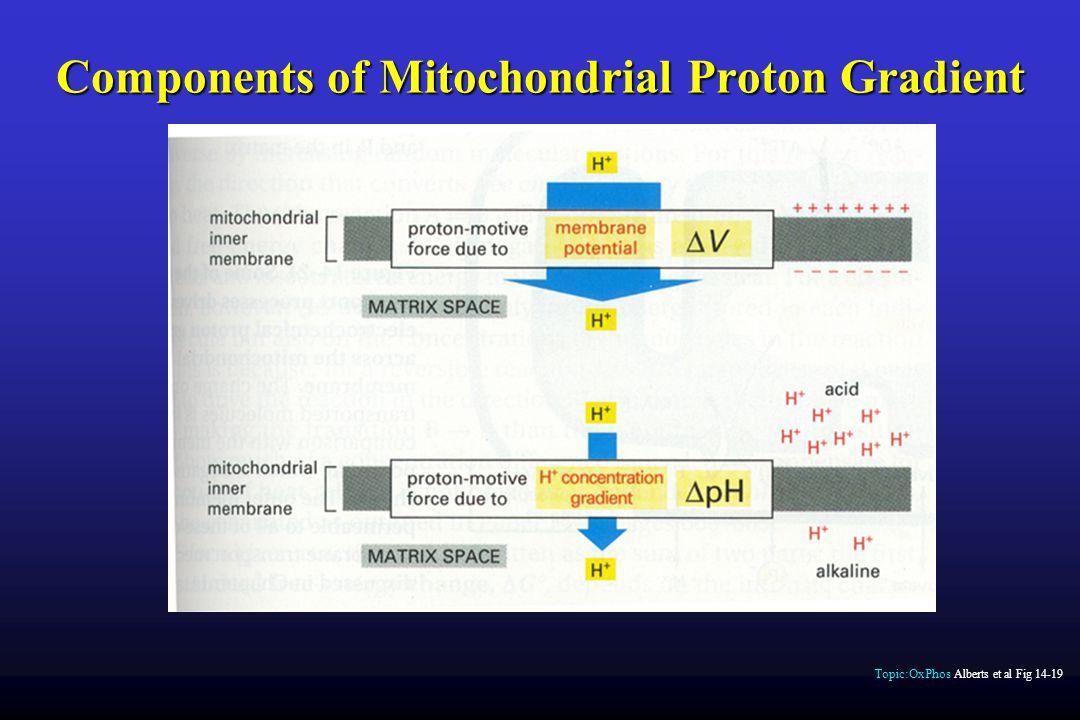 Components of Mitochondrial Proton Gradient Topic:OxPhos Alberts et al Fig 14-19
