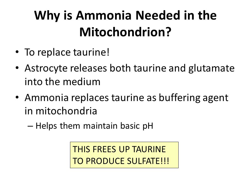 Glutamate during Encephalitis Synapse mitochondrion ammonia Astrocyte Presynaptic neuron Postsynaptic neuron Ammonia replaces taurine in mitochondrion and frees up taurine for something else.