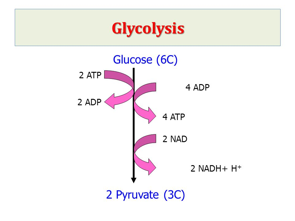 Genetic defects of glycolytic enzymes Pyruvate kinase deficiency Pyruvate kinase (PK) deficiency leads to a reduced rate of glycolysis with decreased ATP production.