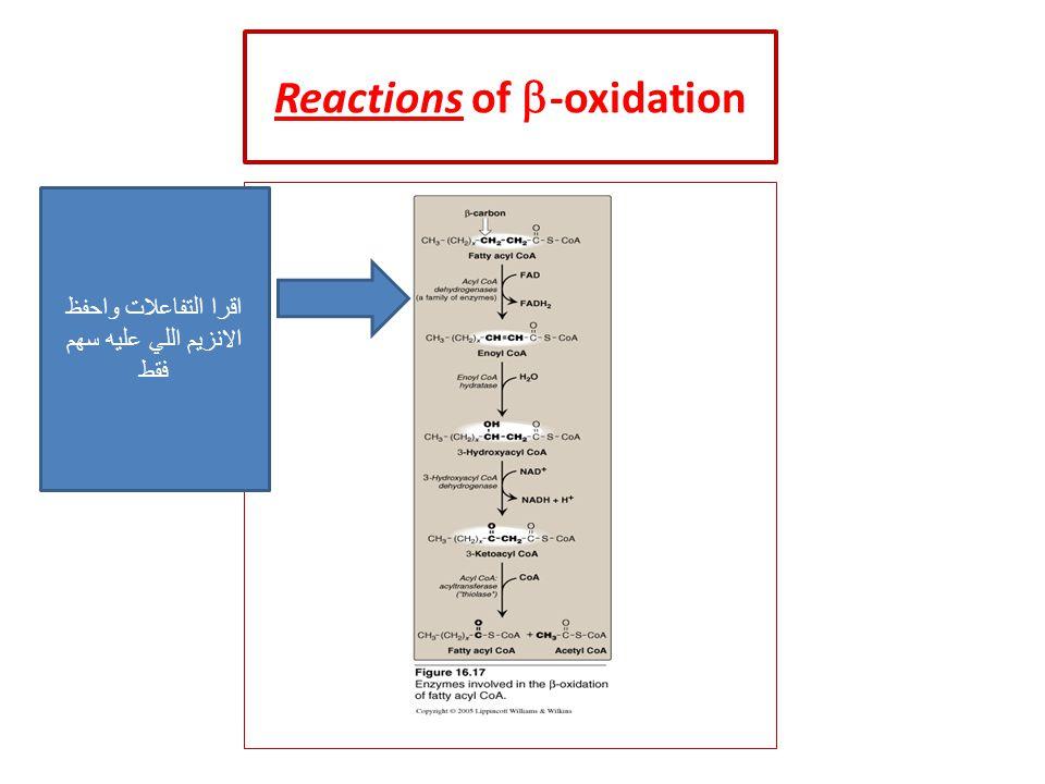 Reactions of  -oxidation اقرا التفاعلات واحفظ الانزيم اللي عليه سهم فقط