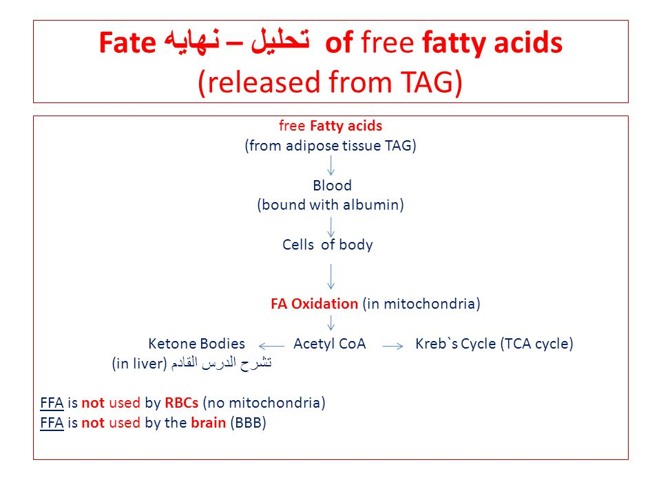 Fate تحليل – نهايه of free fatty acids (released from TAG) free Fatty acids (from adipose tissue TAG) Blood (bound with albumin) Cells of body FA Oxidation (in mitochondria) Ketone Bodies Acetyl CoA Kreb`s Cycle (TCA cycle) (in liver) تشرح الدرس القادم FFA is not used by RBCs (no mitochondria) FFA is not used by the brain (BBB)