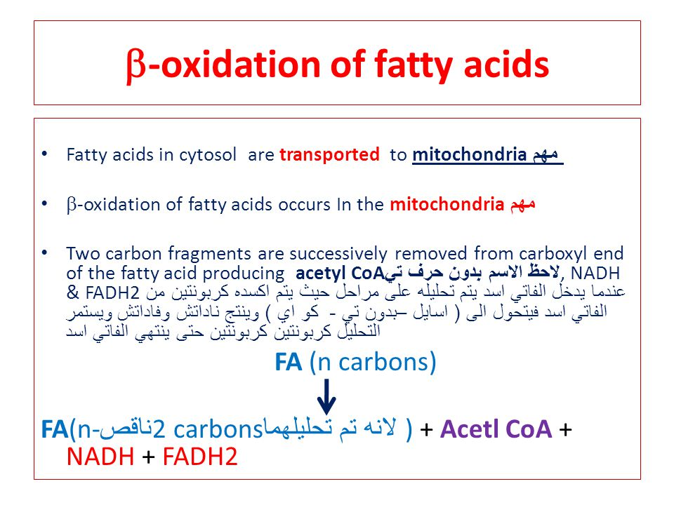  -oxidation of fatty acids Fatty acids in cytosol are transported to mitochondria مهم  -oxidation of fatty acids occurs In the mitochondria مهم Two