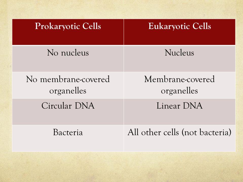 Prokaryotic CellsEukaryotic Cells No nucleusNucleus No membrane-covered organelles Membrane-covered organelles Circular DNALinear DNA BacteriaAll othe