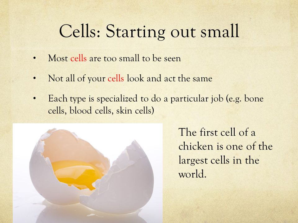 Cells: Starting out small Most cells are too small to be seen Not all of your cells look and act the same Each type is specialized to do a particular