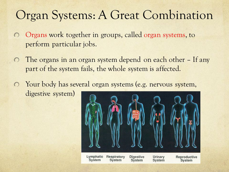 Organ Systems: A Great Combination Organs work together in groups, called organ systems, to perform particular jobs. The organs in an organ system dep