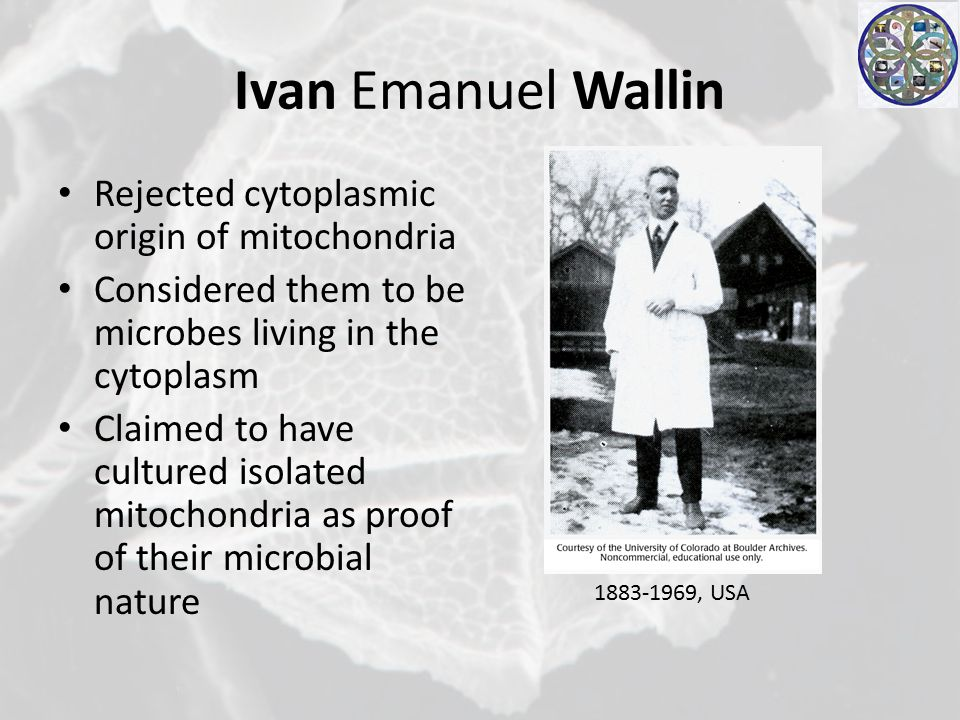 Ivan Emanuel Wallin Rejected cytoplasmic origin of mitochondria Considered them to be microbes living in the cytoplasm Claimed to have cultured isolated mitochondria as proof of their microbial nature 1883-1969, USA