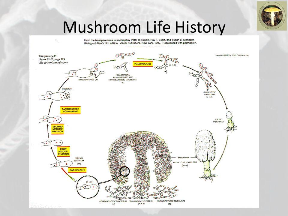 Mushroom Life History