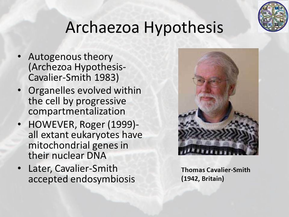 Archaezoa Hypothesis Autogenous theory (Archezoa Hypothesis- Cavalier-Smith 1983) Organelles evolved within the cell by progressive compartmentalization HOWEVER, Roger (1999)- all extant eukaryotes have mitochondrial genes in their nuclear DNA Later, Cavalier-Smith accepted endosymbiosis Thomas Cavalier-Smith (1942, Britain)