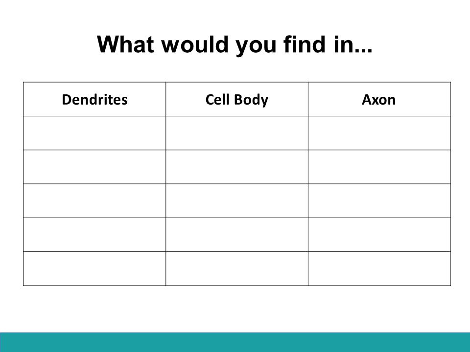 What would you find in... DendritesCell BodyAxon