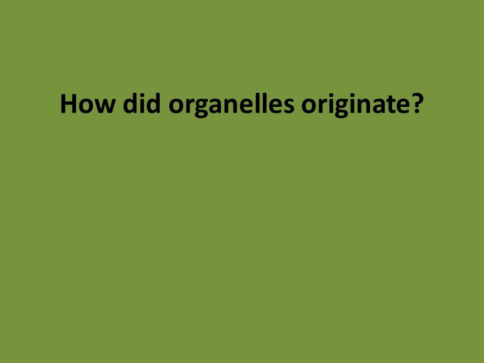 How did organelles originate