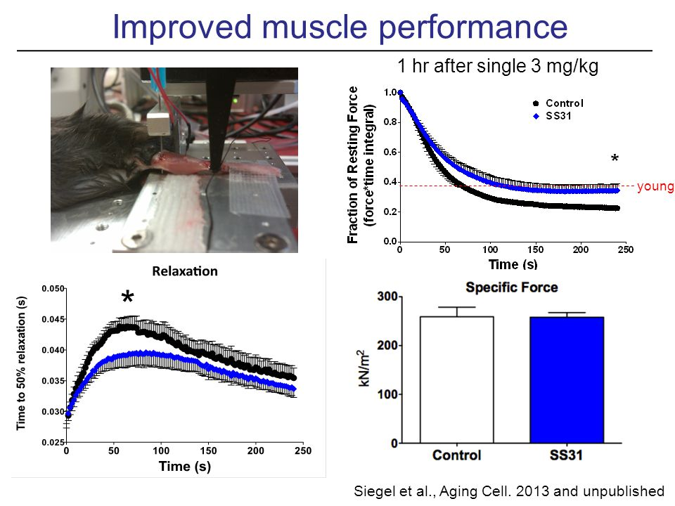 Improved muscle performance 1 hr after single 3 mg/kg young Siegel et al., Aging Cell.