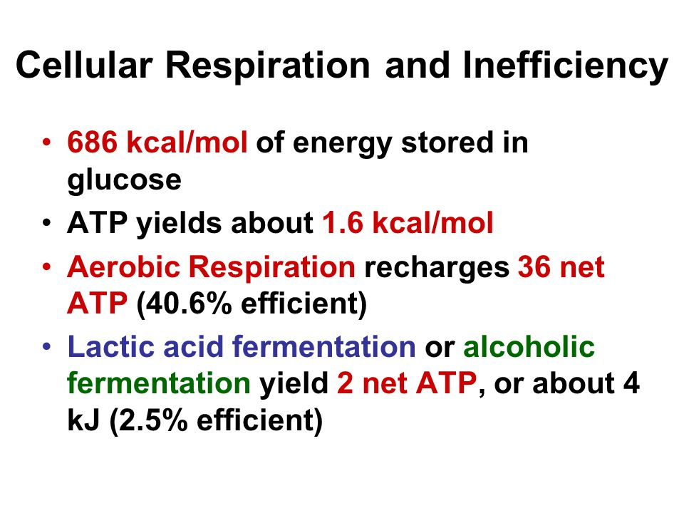 Cellular Respiration and Inefficiency 686 kcal/mol of energy stored in glucose ATP yields about 1.6 kcal/mol Aerobic Respiration recharges 36 net ATP