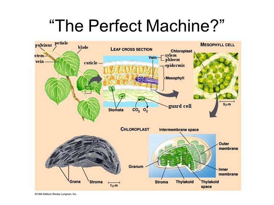 """The Perfect Machine?"""