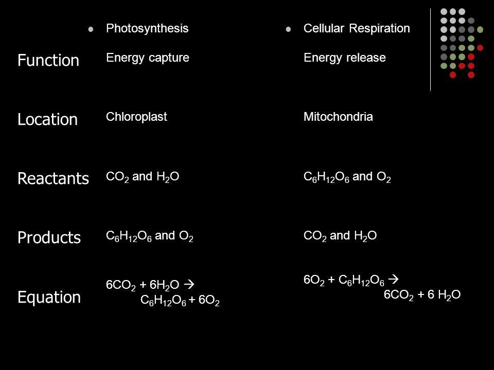 Photosynthesis Energy capture Chloroplast CO 2 and H 2 O C 6 H 12 O 6 and O 2 6CO 2 + 6H 2 O  C 6 H 12 O 6 + 6O 2 Cellular Respiration Energy release