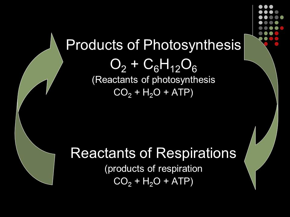 Products of Photosynthesis O 2 + C 6 H 12 O 6 (Reactants of photosynthesis CO 2 + H 2 O + ATP) Reactants of Respirations (products of respiration CO 2