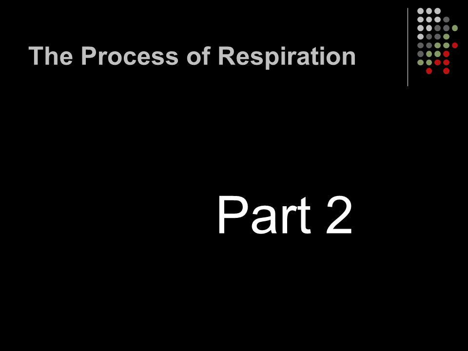 The Process of Respiration Part 2