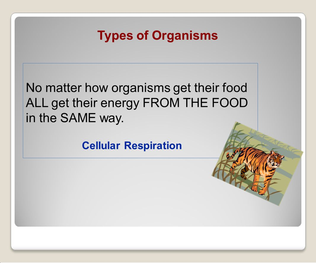 Cellular Respiration No matter how organisms get their food ALL get their energy FROM THE FOOD in the SAME way.