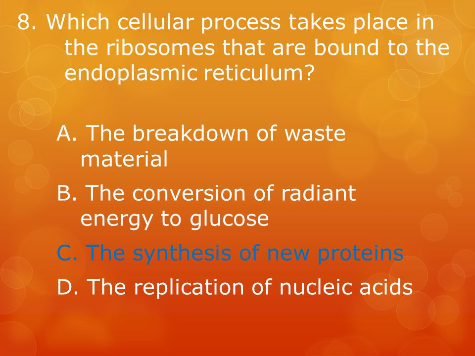 8. Which cellular process takes place in the ribosomes that are bound to the endoplasmic reticulum.