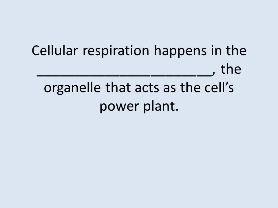 Cellular respiration happens in the _______________________, the organelle that acts as the cell's power plant.