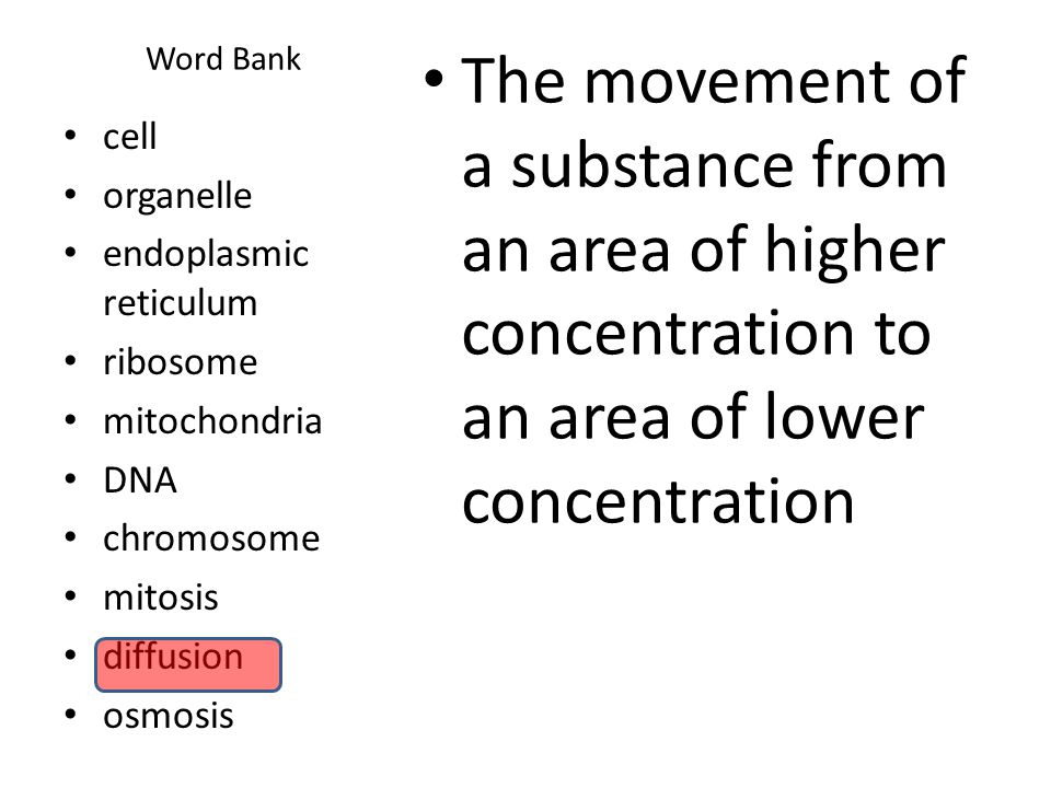 Word Bank The movement of a substance from an area of higher concentration to an area of lower concentration cell organelle endoplasmic reticulum ribosome mitochondria DNA chromosome mitosis diffusion osmosis