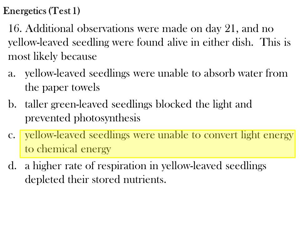16. Additional observations were made on day 21, and no yellow-leaved seedling were found alive in either dish. This is most likely because a.yellow-l