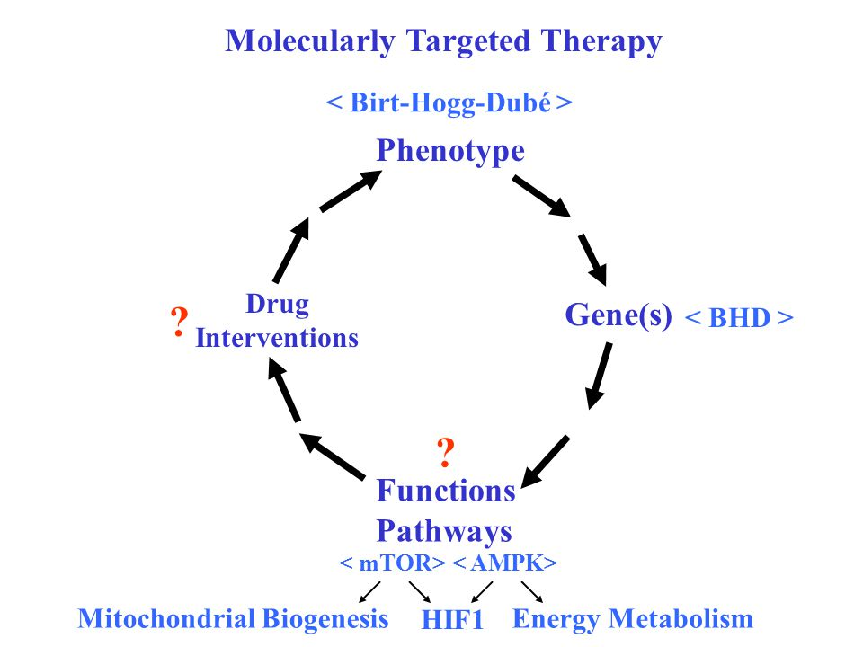 Molecularly Targeted Therapy Phenotype Gene(s) Functions Pathways Drug Interventions Mitochondrial Biogenesis HIF1 Energy Metabolism .