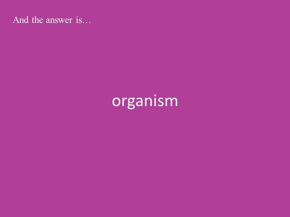 organism And the answer is…