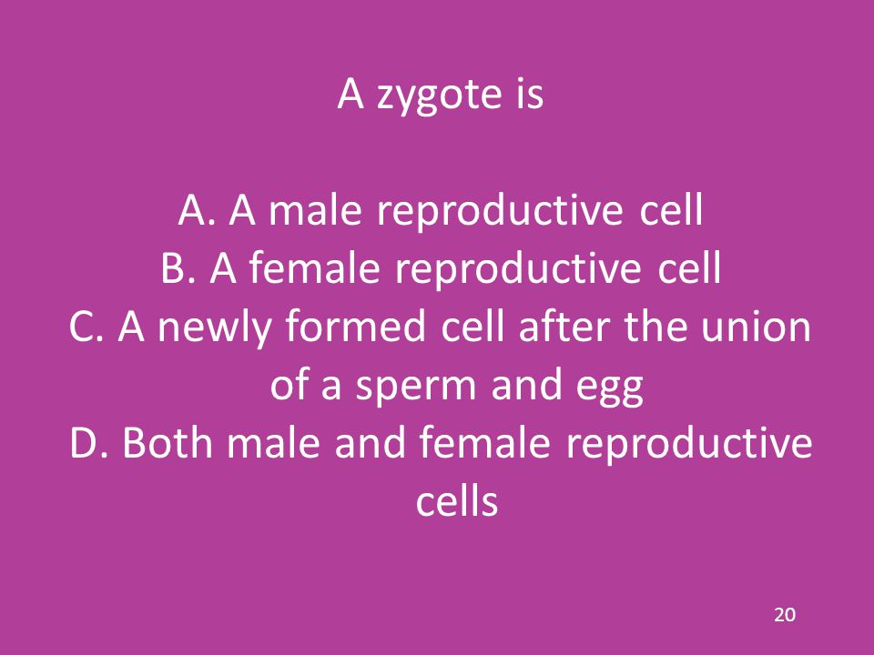 A zygote is A.A male reproductive cell B. A female reproductive cell C.