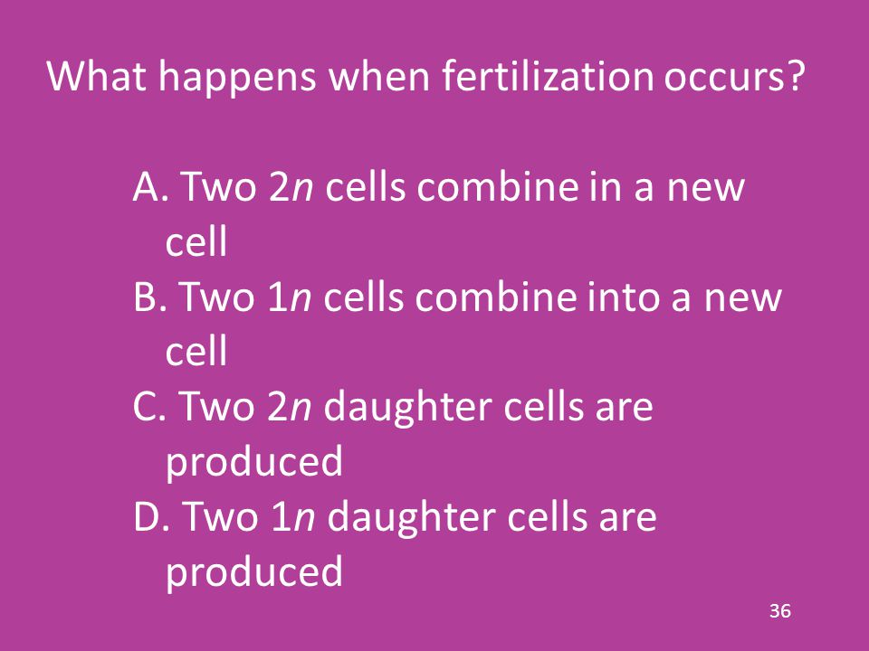 36 What happens when fertilization occurs.A. Two 2n cells combine in a new cell B.
