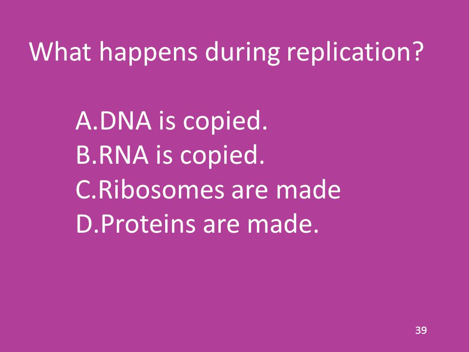 39 What happens during replication. A.DNA is copied.